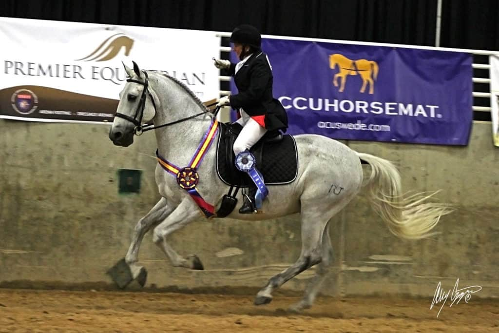 Kim Johan-Nass and Vendito RJ take home the Accuhorsemat Cup at the 2016 International Andalusian and Lusitano Horse Association (IALHA) National Championship Show