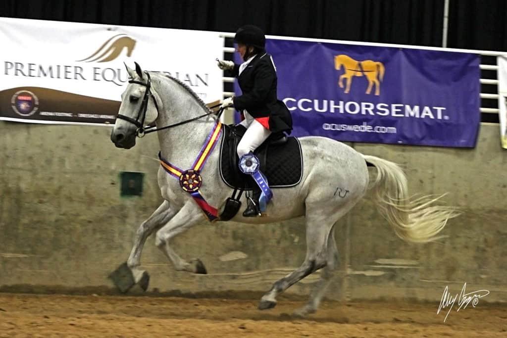 Kim Johan-Nass and Vendito RJ take home the Accuhorsemat Cup at the 2016 International Andalusian and Lusitano Horse Association (IALHA) National Championship Show